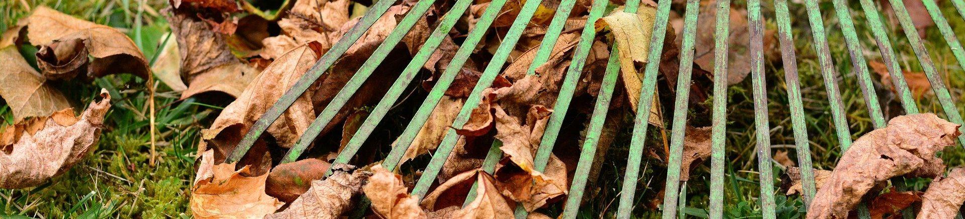 leaves-2901684_1920